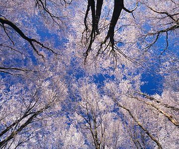 Bomen met rijp, Zwabische Alb van Markus Lange