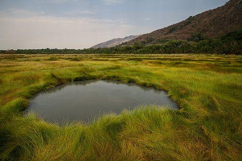 Hotspring in het groene gras