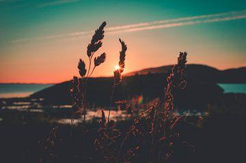 zonsopkomst boven de poolcirkel von Mitchell Routs