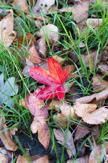 Red leaf van Jaap Burggraaf