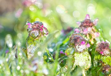 Bevroren bloemen van Jeroen Mikkers
