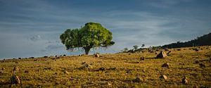Groen en droog; oost Australië