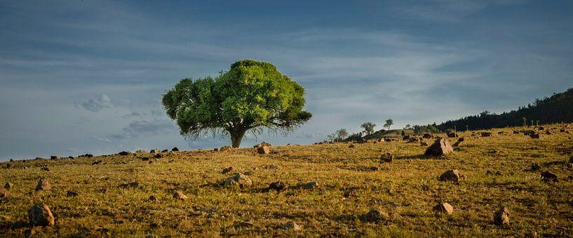 Groen en droog; oost Australië van Sven Wildschut