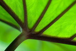 Tegenlichtopname van een groen blad.
