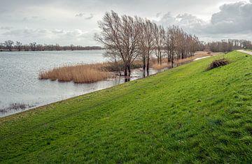 Hoog water peil in een Nederlandse rivier van Ruud Morijn