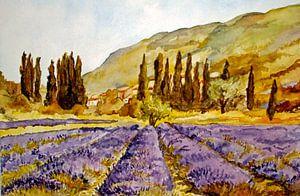 La Provence van