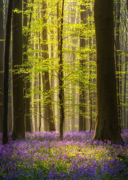 Tree spotlight van Steven Driesen