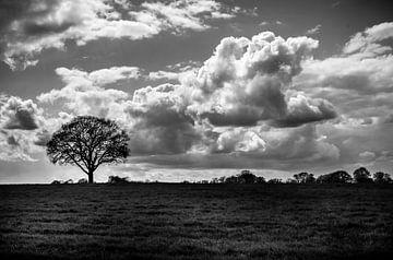 Baum in Wiese Schwarz/Weiß von Michiel ter Elst