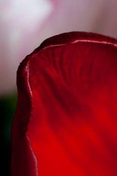 Rotes Tulpenblatt von Anita van Hengel