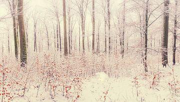 Panorama des forêts d'hiver sur Tobias Luxberg