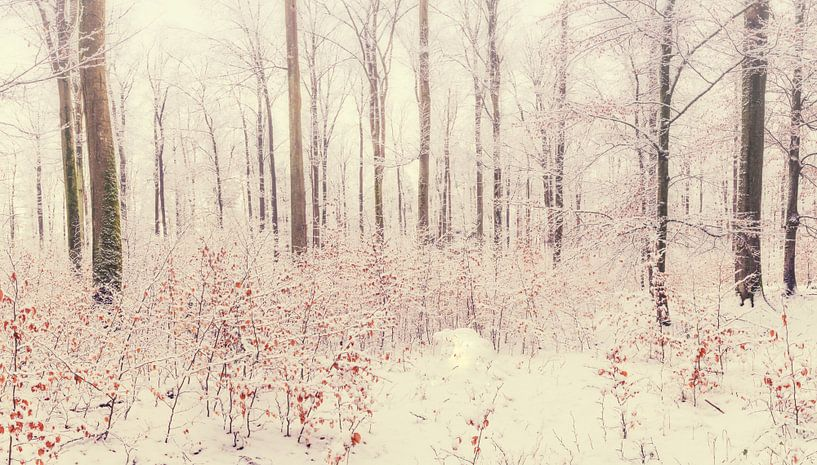 Winterwoud Panorama van Tobias Luxberg