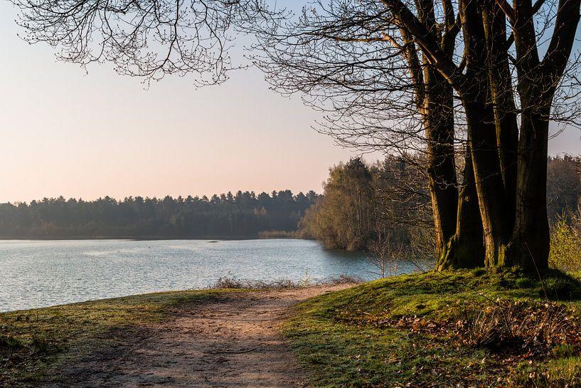 Sunrise Trees van William Mevissen