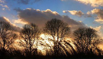 Winterbeeld van M de Vos