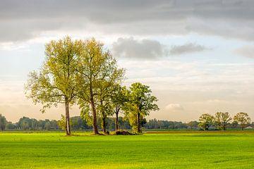 Hoge bomen in groen landschap van Ruud Morijn