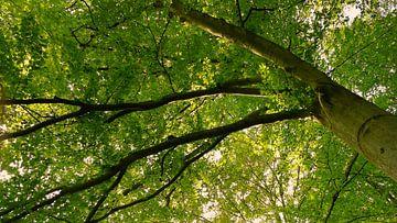 Wald am Morgen  von Jenny Heß
