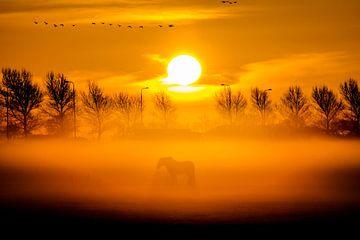 Paard in de mist sur Dennis Dieleman