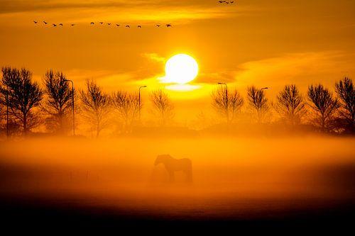 Paard in de mist van Dennis Dieleman