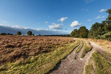 Heideland mit sandigen Wegen und bedrohlicher Luft von Martin Stevens