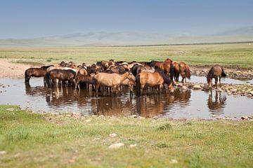 Pferde von Anne-Marie Vermaat