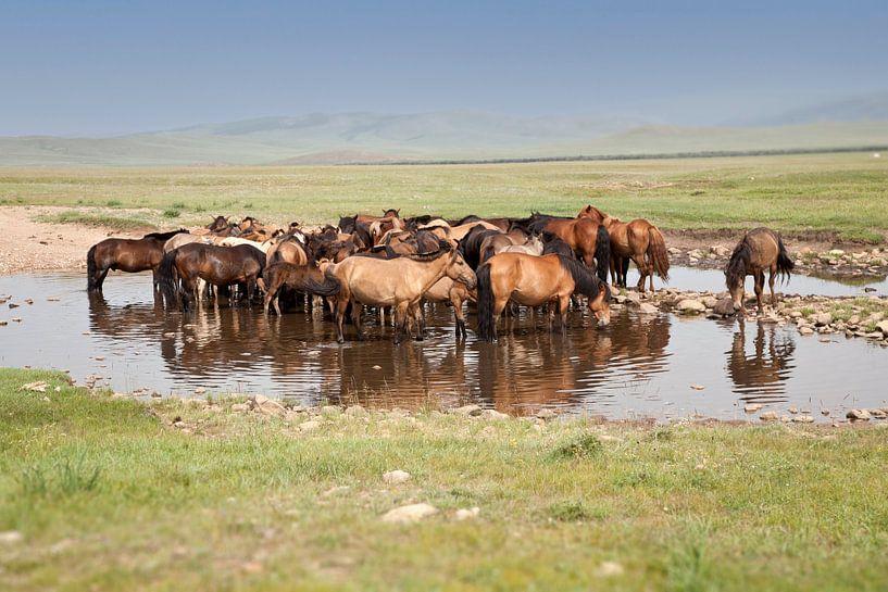 paarden van Anne-Marie Vermaat