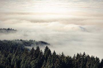 Vintage Wald in den Wolken, Nature Magick  von PI Creative Art