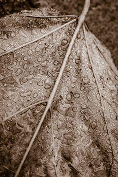 Trompetboomblad met regendruppels (Catalpa) van Jefra Creations