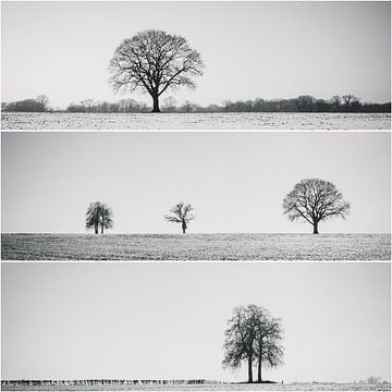 Einsame Baum-Collage von Rob van der Pijll