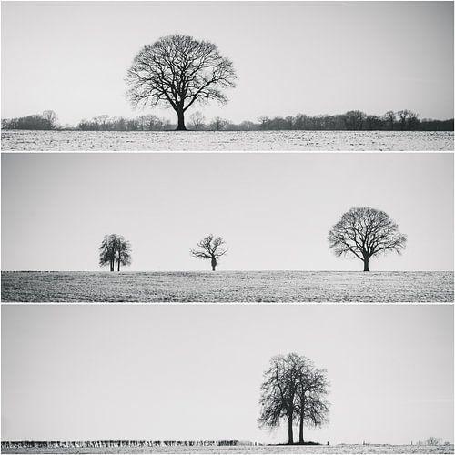 Collage d'arbres isolés