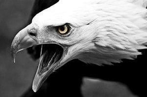 Birds of prey van