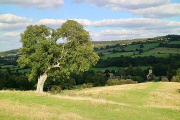 Boom in landschap, Cotswolds (Engeland) van Leendert de Vink
