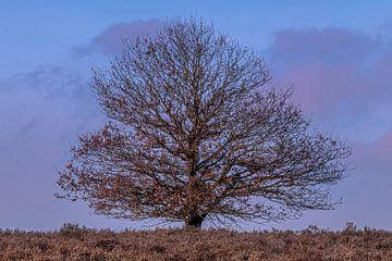 oude boom bij zonsondergang van Arnoud van der Aart