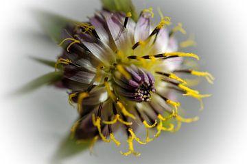Fantaisie florale sur