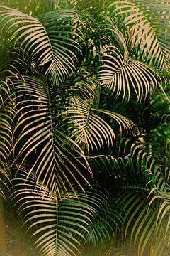 Dschungel, Dschungel von Marieke Bakker