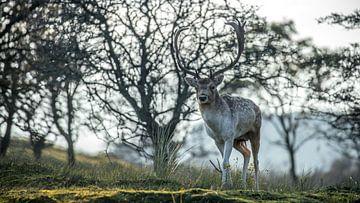 Herfst achtige herten foto van Simone Haaring