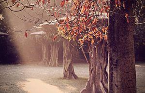 Winterglow van