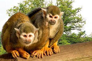 Twee kleine aapjes op een boomstam