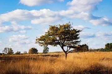 landschap in De Plateau - Hageven van Ronenvief