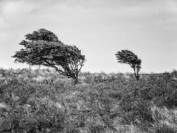 Windflüchter in schwarzweiß von Katrin May