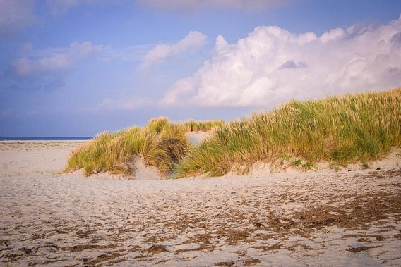 Grassy dunes van Alessia Peviani
