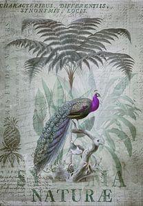 Pfau im Tropenparadies