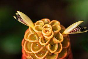 Red pine cone ginger,  wat een prachtige bloem uit het mooie Costa Rica van Mirjam Welleweerd