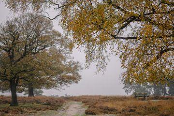 herfst over de grijze heide van Tania Perneel