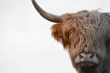 Kop Schotse hooglander 2 kleurig van Sascha van Dam