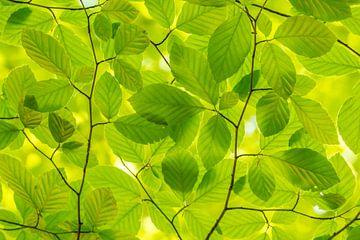 Mint groene Lente bladeren van Marco Liberto