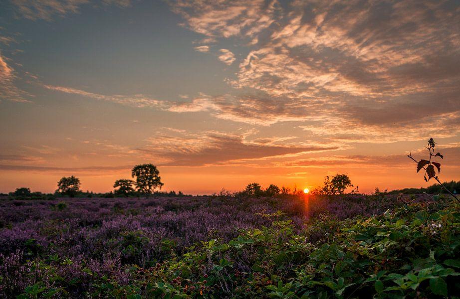 De heidevelden van Hilversum van Robin Pics