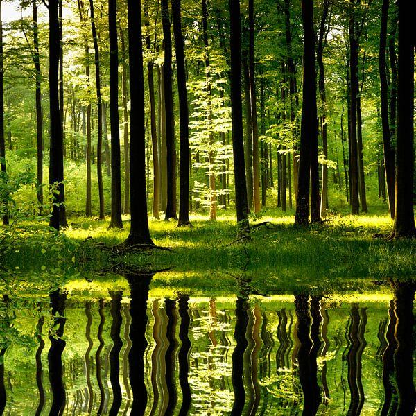 Forest Magic van Renate Knapp