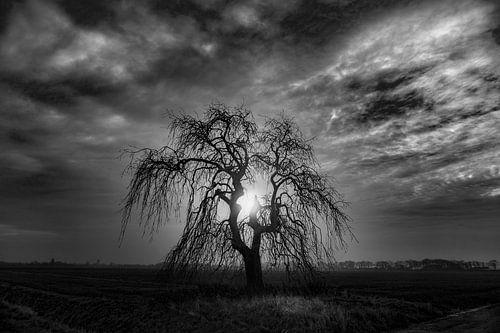 Griezelige boom. van