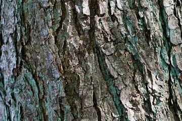 Bast van een boom van Anita van Hengel
