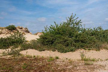 Dünen im schönen Naturgebiet Meijendal von Mirjam Welleweerd