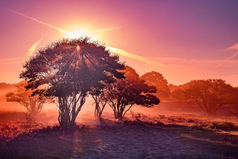 Purple morning van Frames by Frank